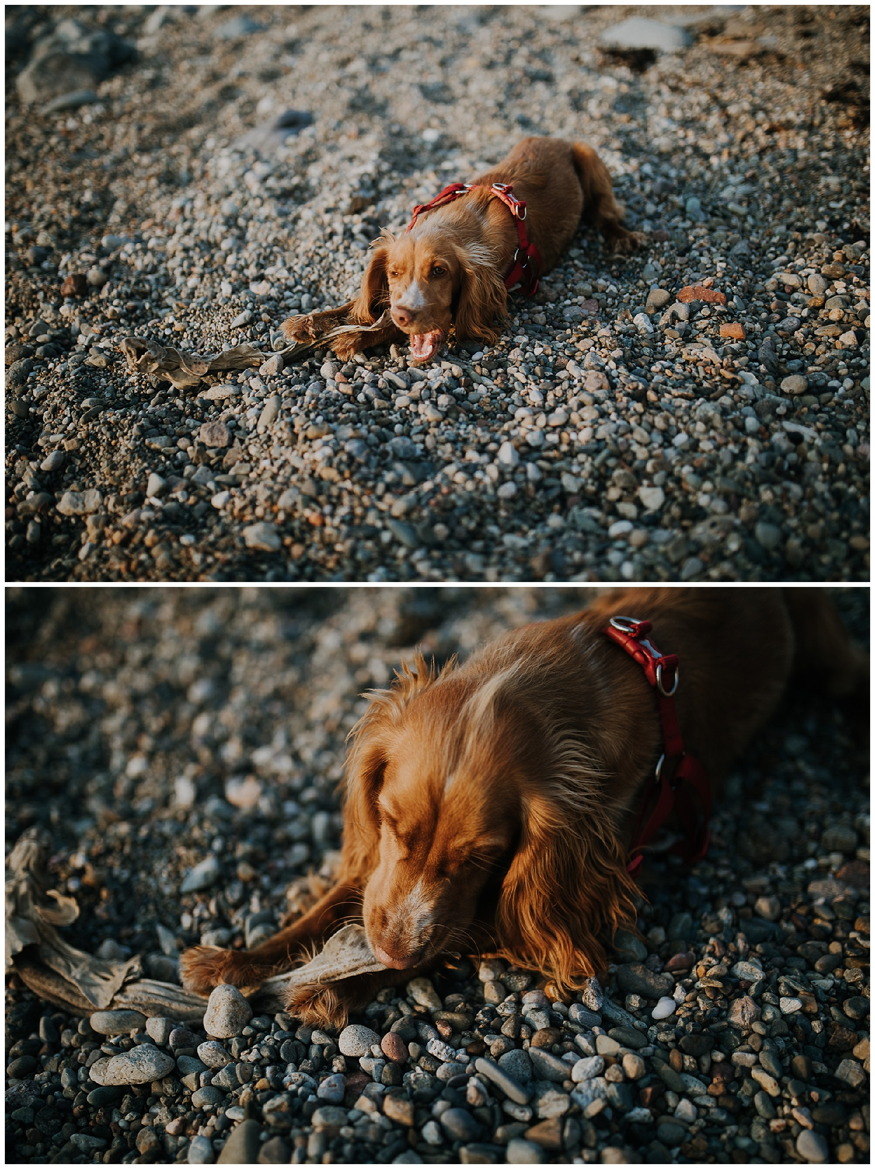 a dog chews on a dogfish