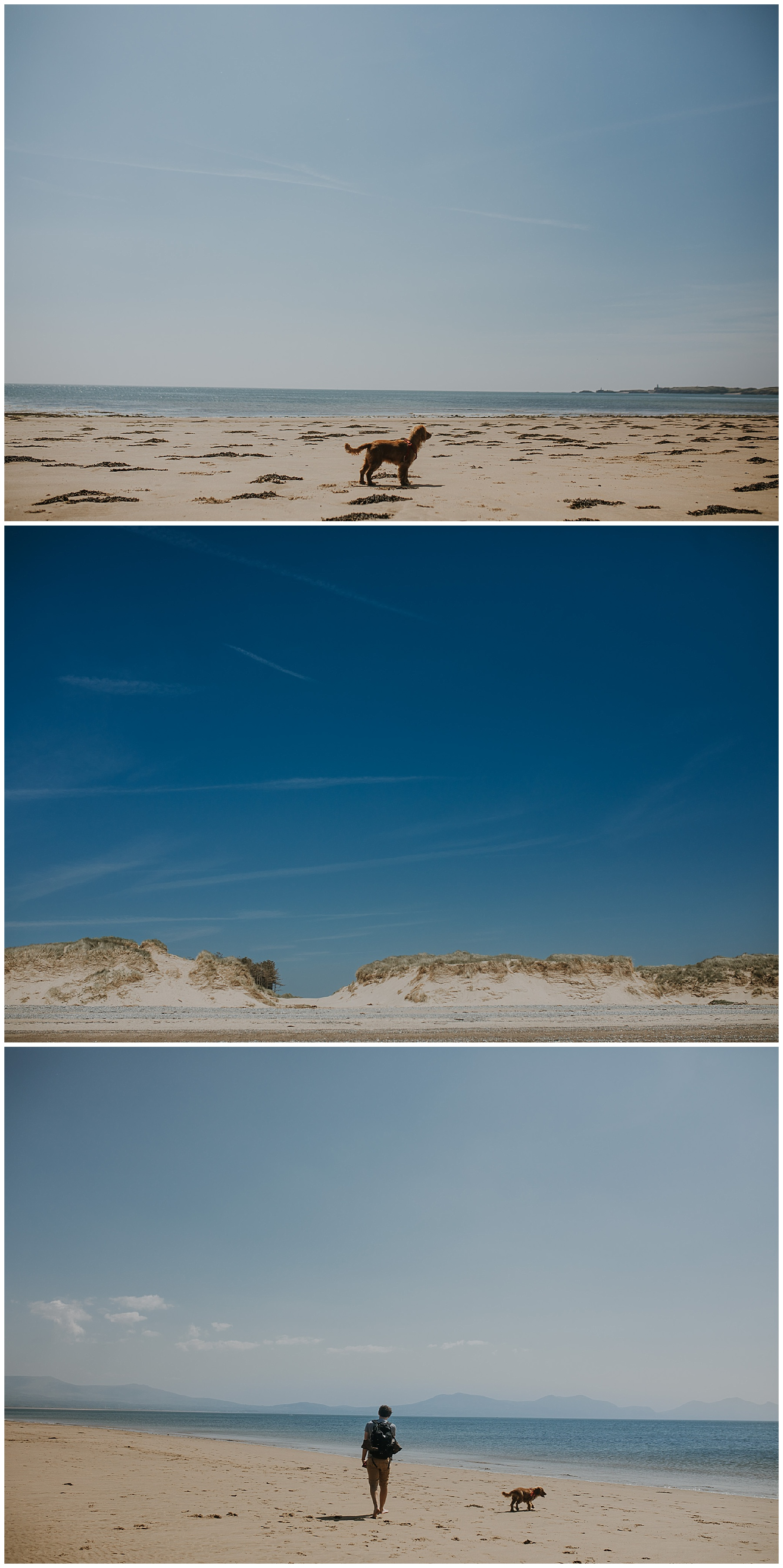 a dog watches over the sea